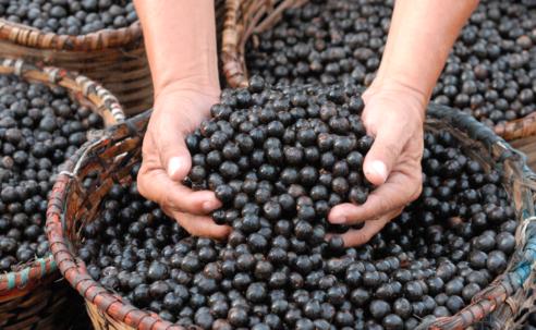 A História dos Alimentos – A Cultura Alimentar a Partir do Brasil