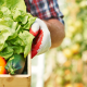 Saiba como seu imposto de renda pode ajudar no combate à fome